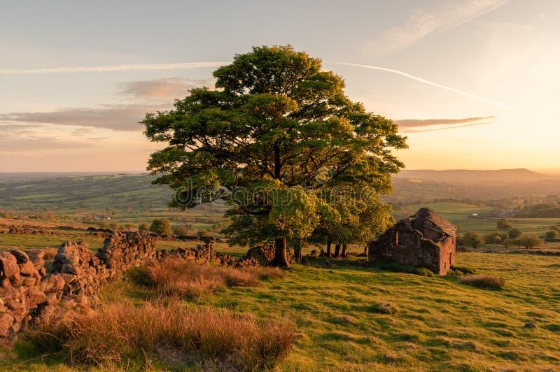 As baratas como luzes do por do sol as árvores, e rochas na extremidade no parque nacional do distrito máximo, Staffordshire da b fotografia de stock royalty free