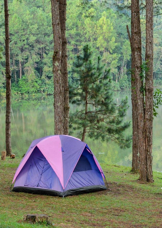As barracas de acampamento aproximam o lago fotografia de stock royalty free