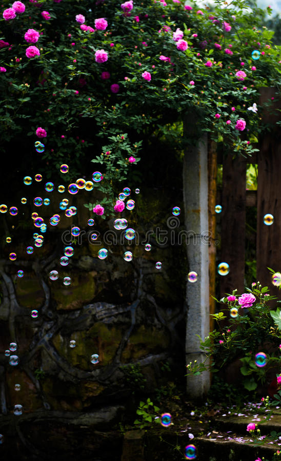 As bolhas colorized no jardim de rosas imagens de stock royalty free