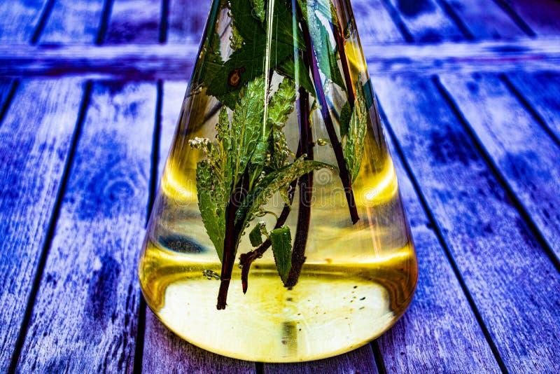 As bolhas molham as folhas em uma garrafa cônica foto de stock royalty free