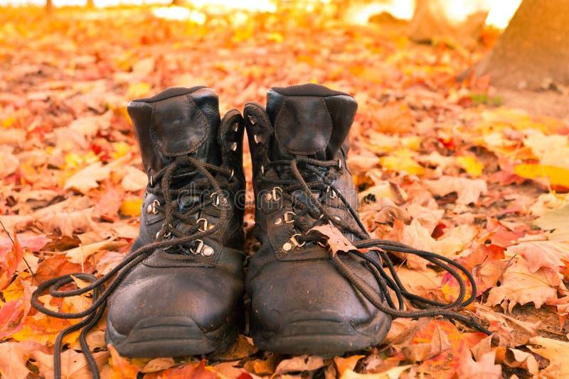 As botas de caminhada de couro vestidas na floresta da queda caminham imagem de stock royalty free