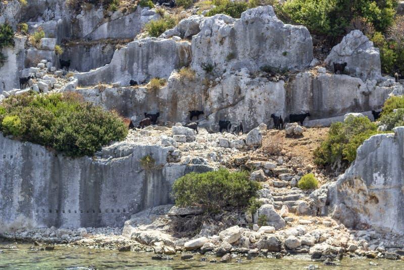 As cabras pretas pequenas filam em ruínas históricas de Lycian perto do mar Mediterrâneo imagens de stock royalty free