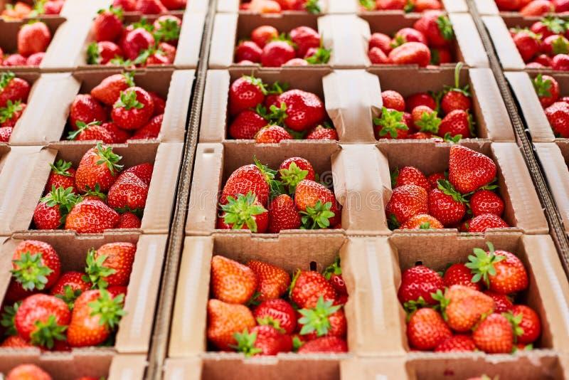 As caixas com as morangos frescas maduras fecham-se acima imagem de stock