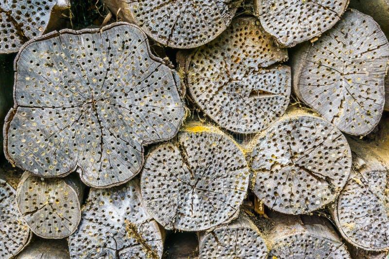 As casas do inseto feitas em troncos de árvore texture o fundo imagem de stock royalty free