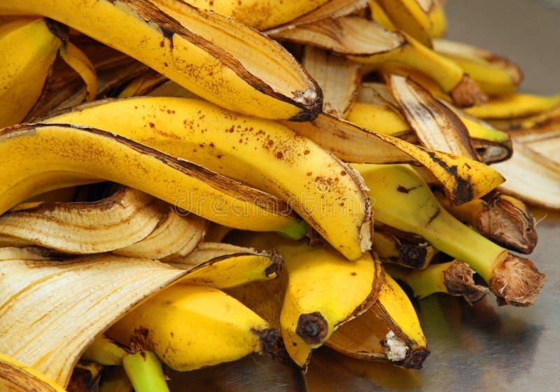As cascas amarelas da banana apenas descascam para armazenar o desperdício orgânico foto de stock royalty free