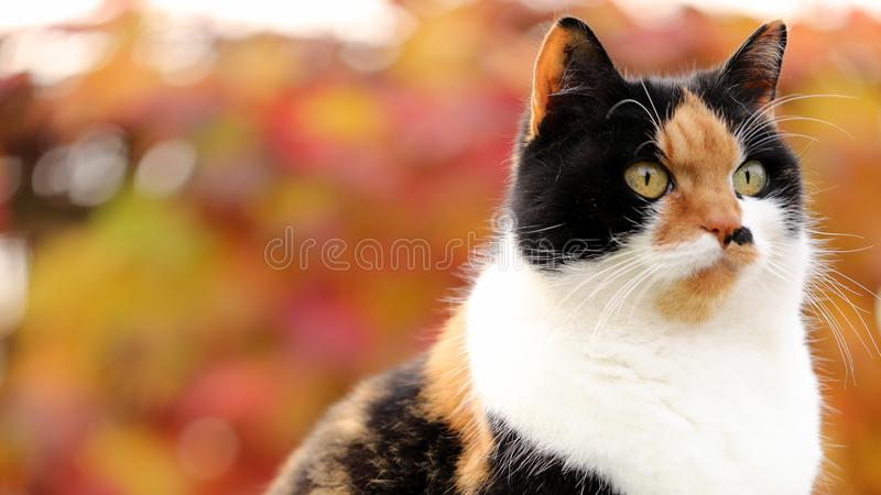 As a cat diva you have to have an eye on everything. royalty free stock photography