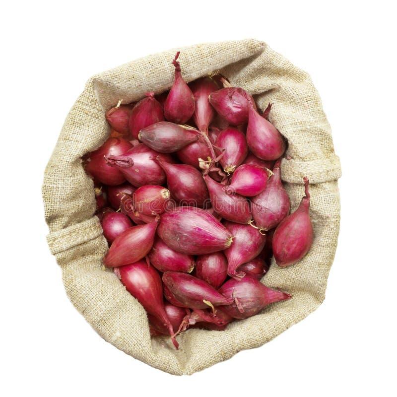 As cebolas pretenderam plantando em um saco de linho, vista de cima de fotografia de stock royalty free