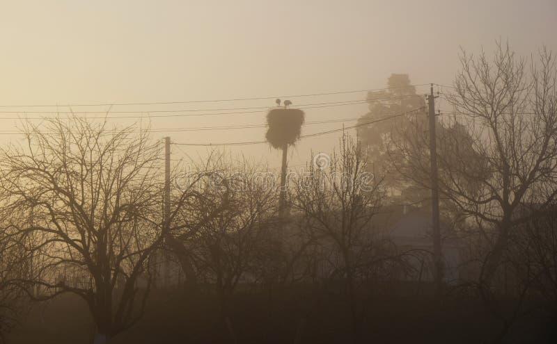 As cegonhas aninham-se no fundo dos fios e das árvores Alvorecer enevoado na vila fotografia de stock royalty free