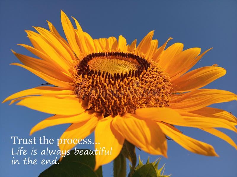 As citações inspiradores inspiradas confiam o processo A vida é sempre bonita na extremidade Com o girassol grande & único bonito fotografia de stock royalty free
