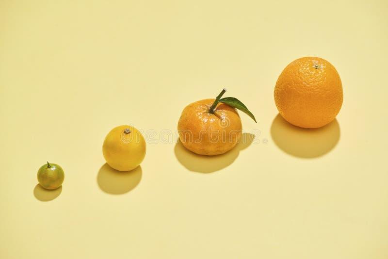 As citrinas estão em um claro - fundo amarelo O Kumquat, limão, o mandarino, laranja está em um fundo amarelo - imagem foto de stock royalty free