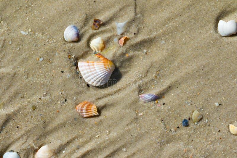As conchas do mar de Brocken na areia molhada encalham no dia de verão quente do sol fotos de stock