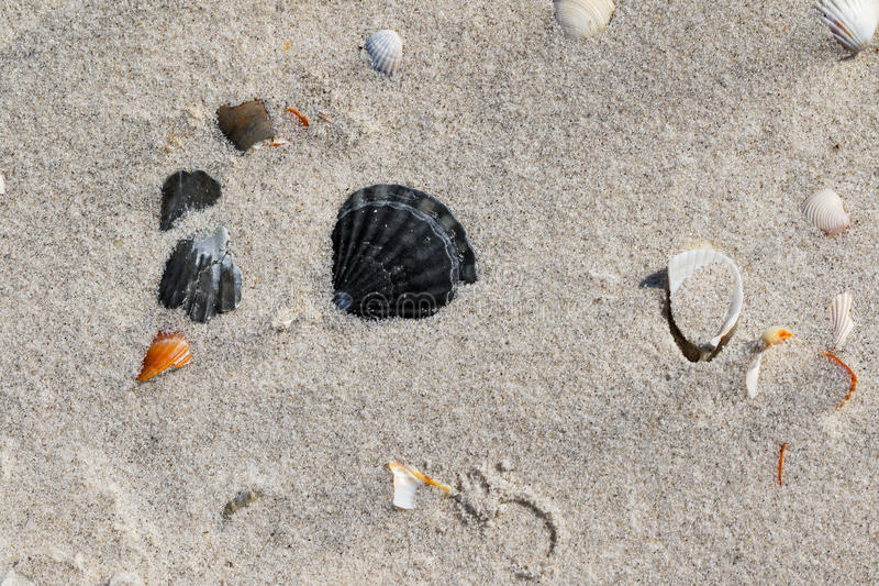 As conchas do mar na areia encalham no dia de verão quente do sol fotos de stock