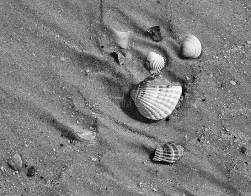 As conchas do mar quebradas preto e branco na areia molhada encalham no sol quente SU foto de stock