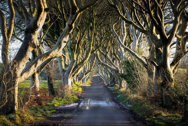 As conversão da obscuridade no inverno foto de stock royalty free