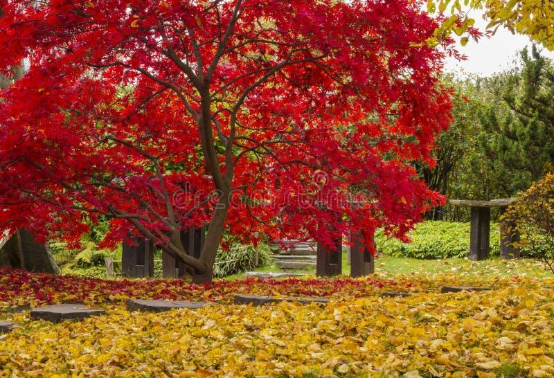 As cores brilhantes de árvores do outono imagens de stock royalty free