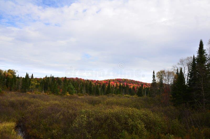As cores da folhagem de outono capturaram na montanha atrás do pinho verde alto fotografia de stock