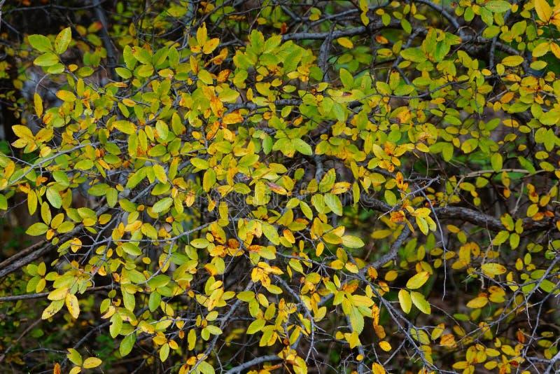 As cores da queda das folhas fotografia de stock