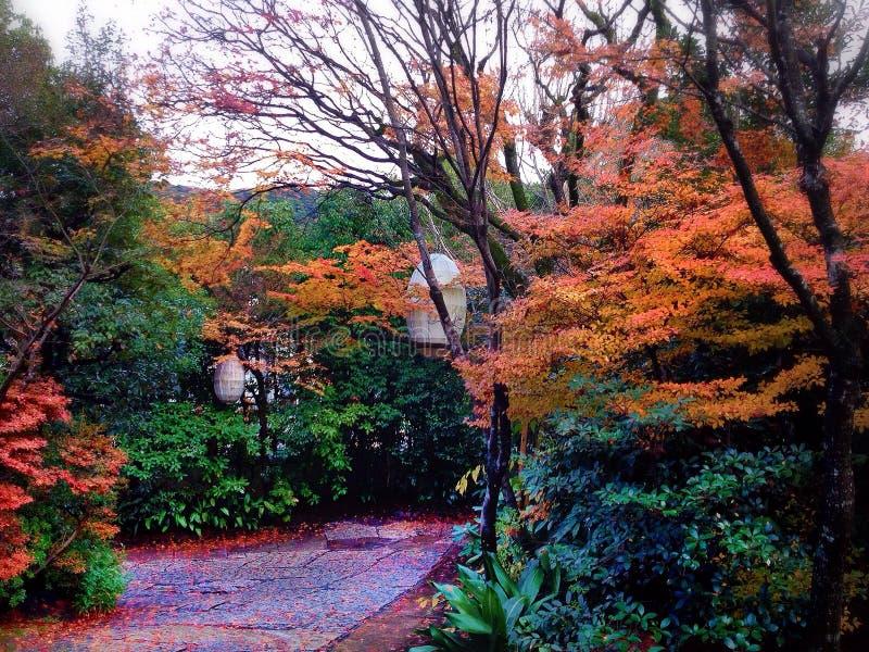 As cores da queda de um jardim de Japão fotos de stock