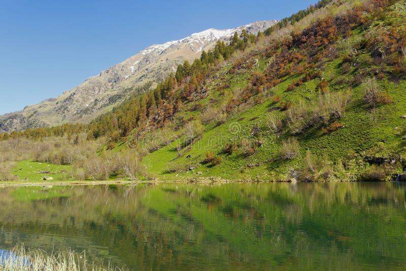 As costas do lago trout na reserva de Teberda Cáucaso ocidental imagens de stock