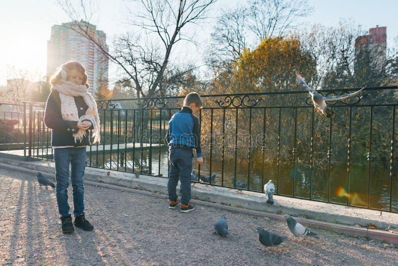 As crianças alimentam os pássaros no parque, rapazes pequenos e as meninas alimentam pombos, pardais e patos na lagoa, dia ensola fotografia de stock