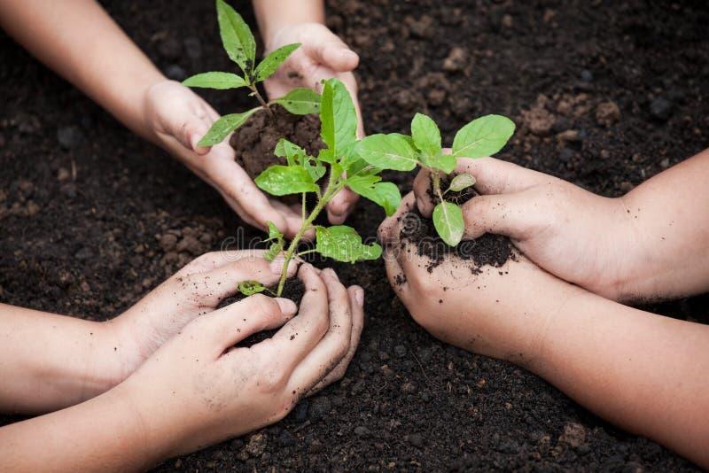 As crianças entregam a plantação da árvore nova no solo preto junto imagens de stock