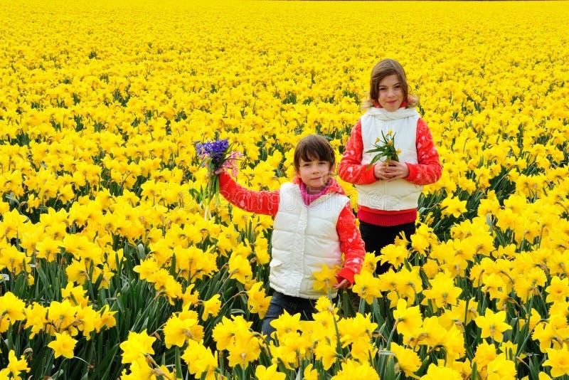 As crianças felizes com as flores da mola em narcisos amarelos amarelos colocam, crianças em férias em Países Baixos fotografia de stock royalty free