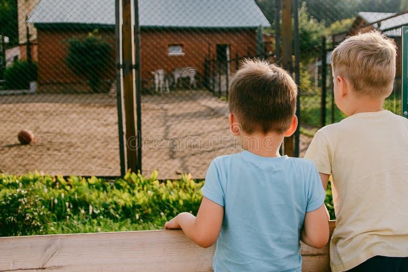 As crianças olham os animais no jardim zoológico imagens de stock