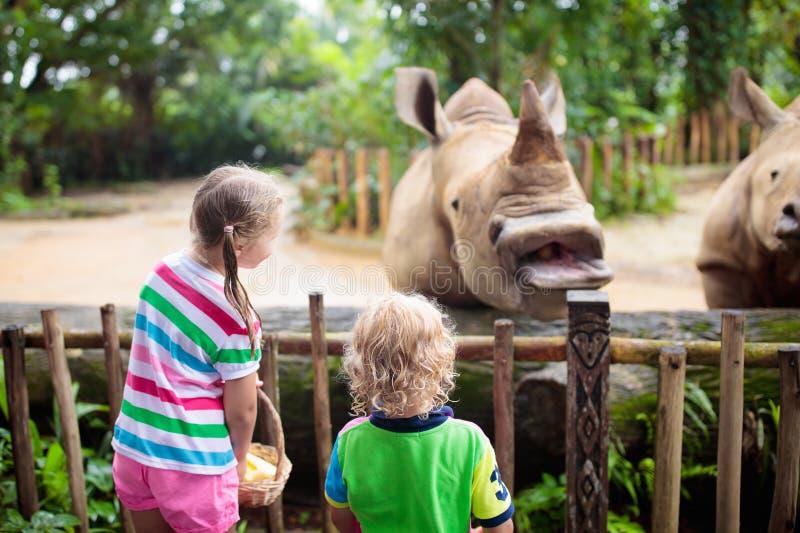 As crian?as alimentam o rinoceronte no jardim zool?gico Fam?lia no parque animal fotos de stock royalty free