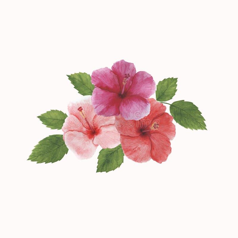 As decorações botânicas da mola da ilustração do quadro da aquarela das folhas das flores dos trópicos projetam convites dos cart imagens de stock