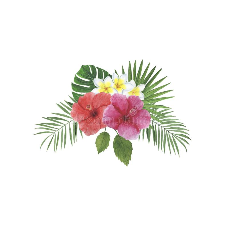 As decorações botânicas da mola da ilustração do quadro da aquarela da palma de Monstera do Plumeria do hibiscus das folhas das f ilustração royalty free