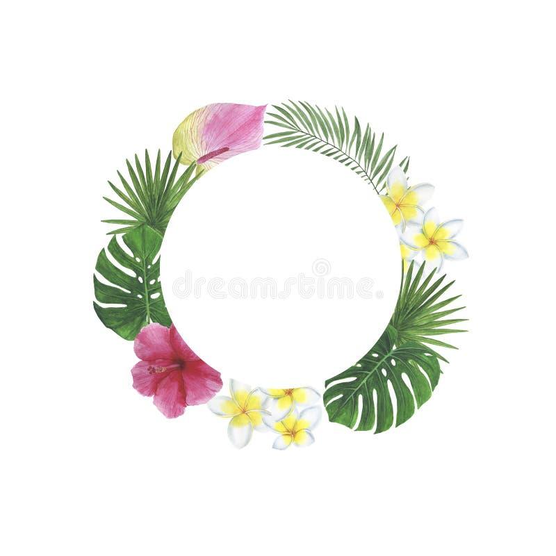 As decorações botânicas da mola da ilustração do quadro da aquarela da palma de Monstera do Plumeria do hibiscus das folhas das f ilustração do vetor