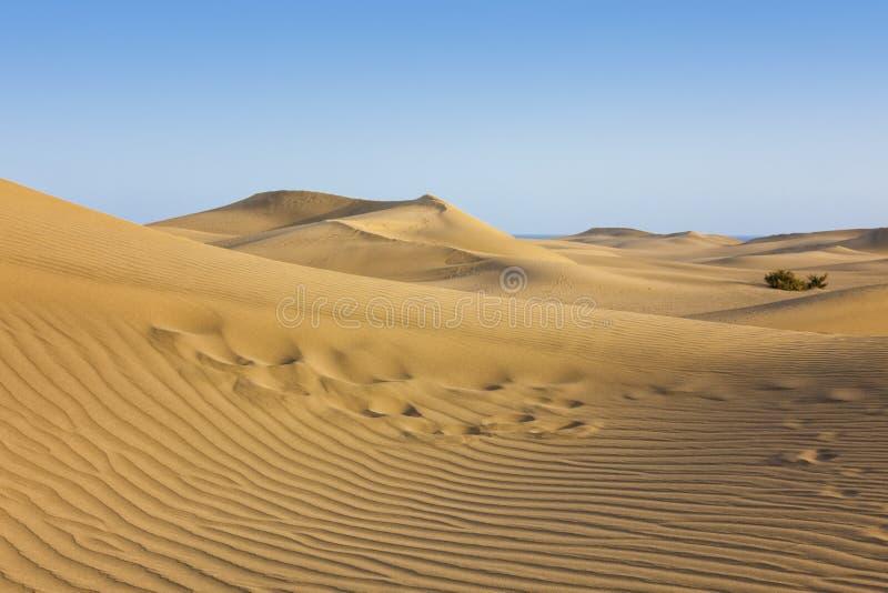 As dunas de Maspalomas, canário grande, Espanha imagem de stock royalty free