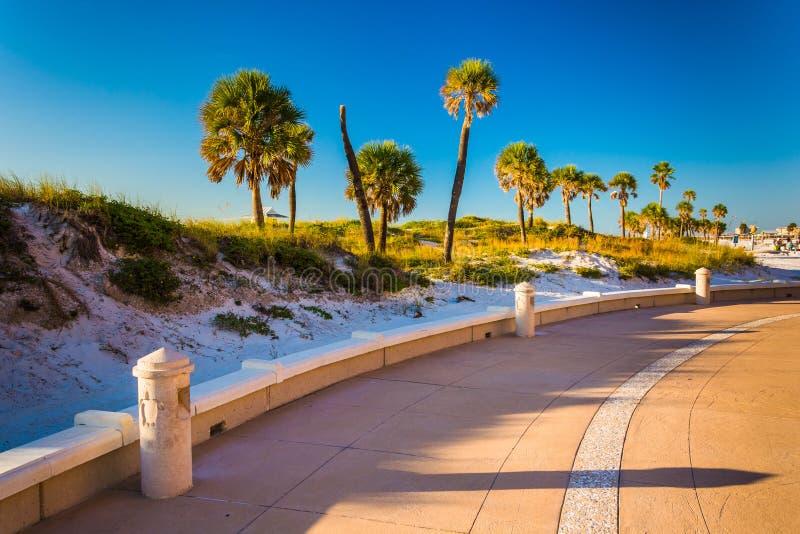 As dunas e as palmeiras de areia ao longo de um trajeto em Clearwater encalham, Flor fotos de stock