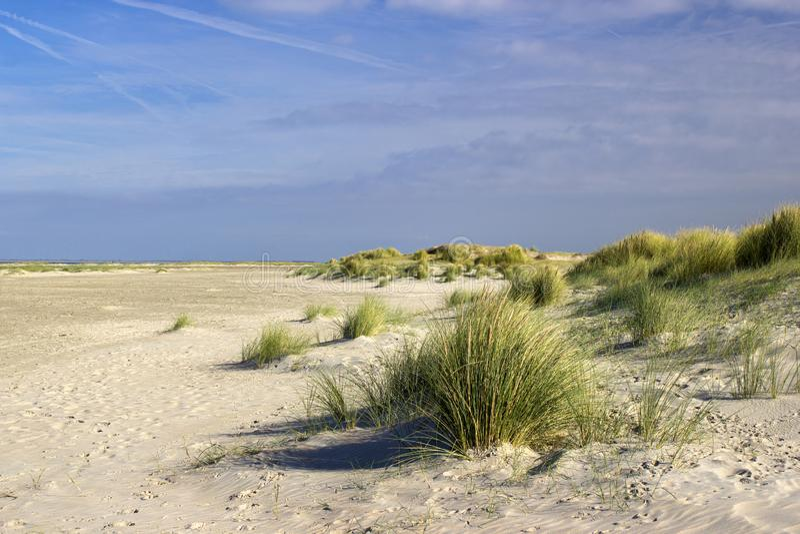 As dunas, Renesse, os Países Baixos fotografia de stock