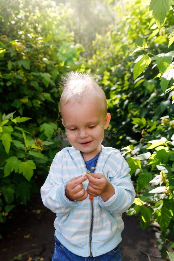 As emoções na opinião infantil do ` s, a criança olham a folha da planta com prazer fotos de stock
