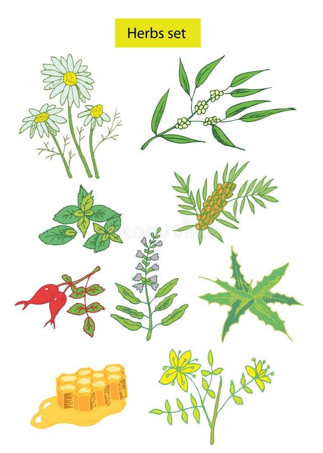 As ervas ajustadas entregam ilustrações desenhadas ilustração do vetor