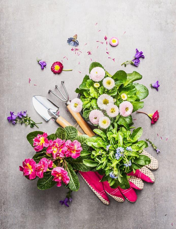 As ferramentas de jardinagem com o jardim bonito fresco florescem em uns potenciômetros no fundo de pedra fotografia de stock royalty free