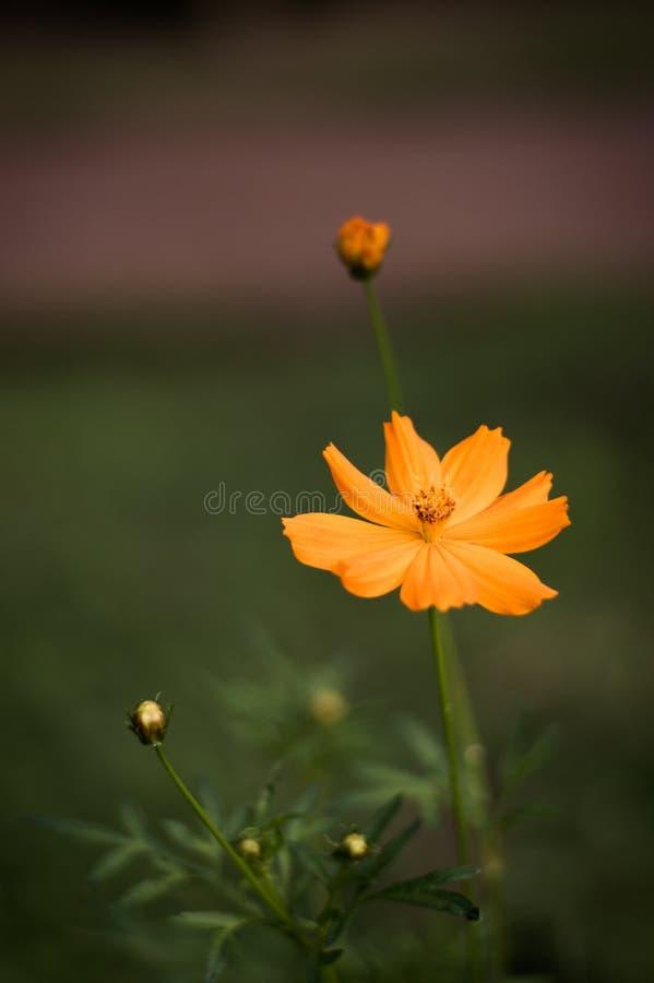 As flores alaranjadas estão para fora belamente fotos de stock