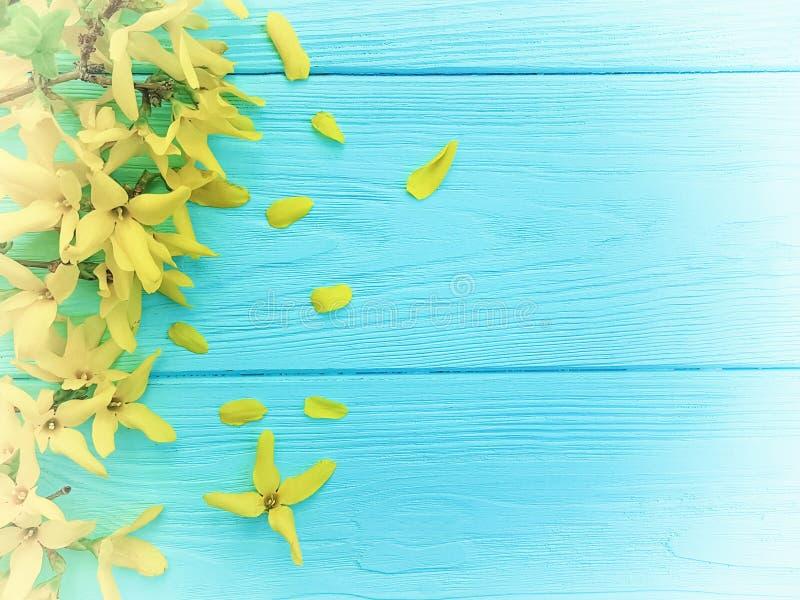 As flores amarelas da mola limitam sazonal no fundo de madeira azul fotos de stock royalty free