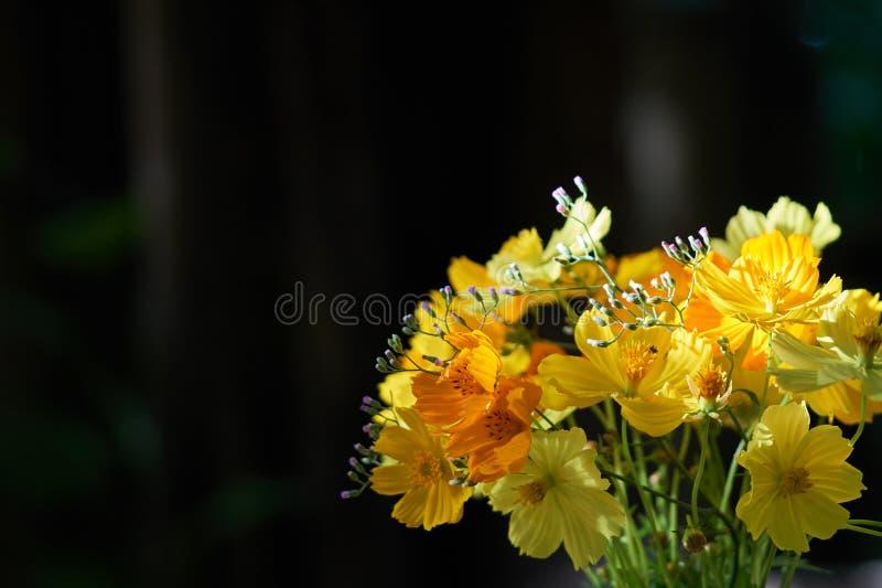 As flores amarelas são arranjadas belamente em uns vasos de flor bonitos e em uma luz solar imagens de stock