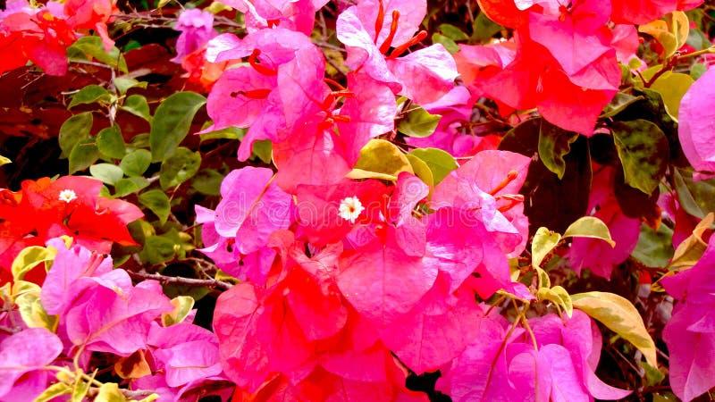 as flores bonitas crescem e florescem acalmando o coração Perto acima, flor de papel imagens de stock