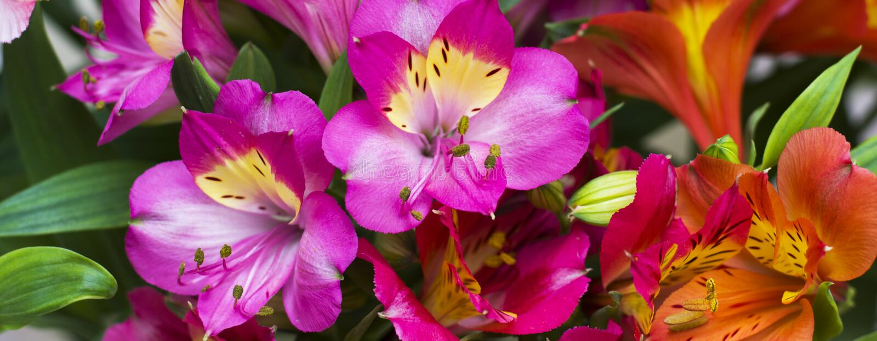 As flores bonitas da mola da cor roxa fotos de stock royalty free