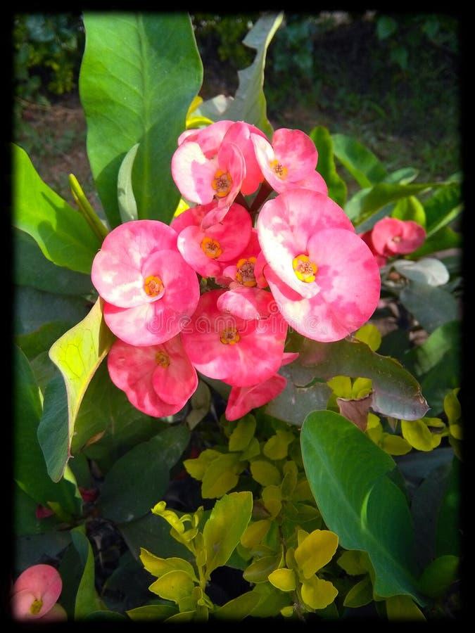 As flores bonitas estão descrevendo a natureza foto de stock