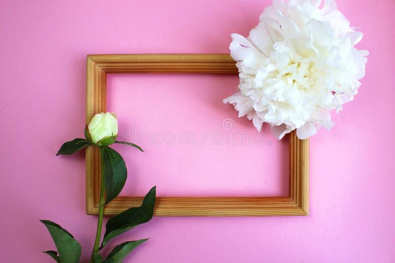 As flores brancas da peônia decoram o quadro fotografia de stock royalty free