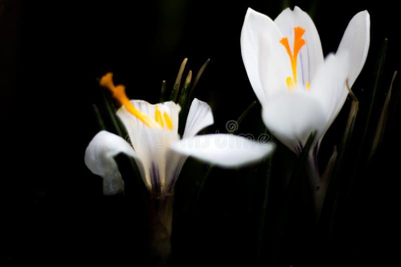 As flores brancas fecham-se acima foto de stock