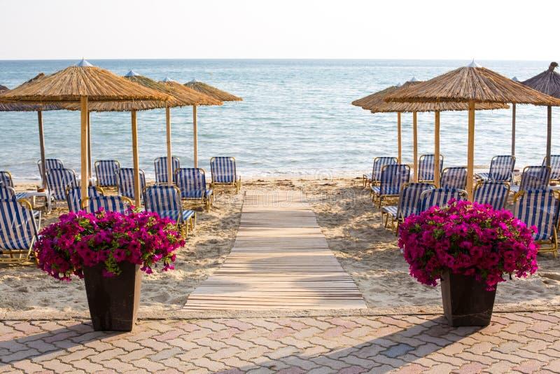 As flores coloridas aproximam o trajeto de madeira ao mar entre guarda-chuvas no Sandy Beach imagens de stock royalty free