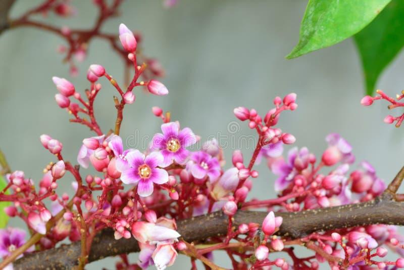 As flores cor-de-rosa bonitas fotos de stock royalty free