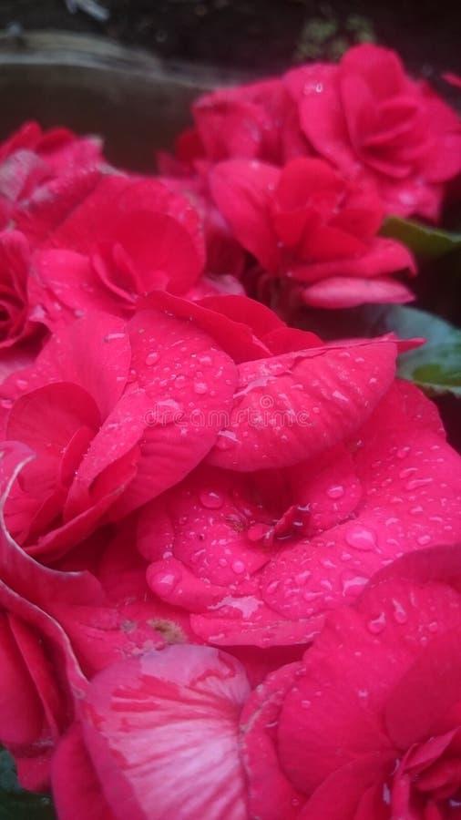 As flores da chuva fecham-se acima fotografia de stock royalty free