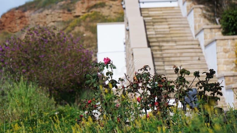 As flores da vegetação no fundo das escadas de pedra em Chipre fotografia de stock royalty free