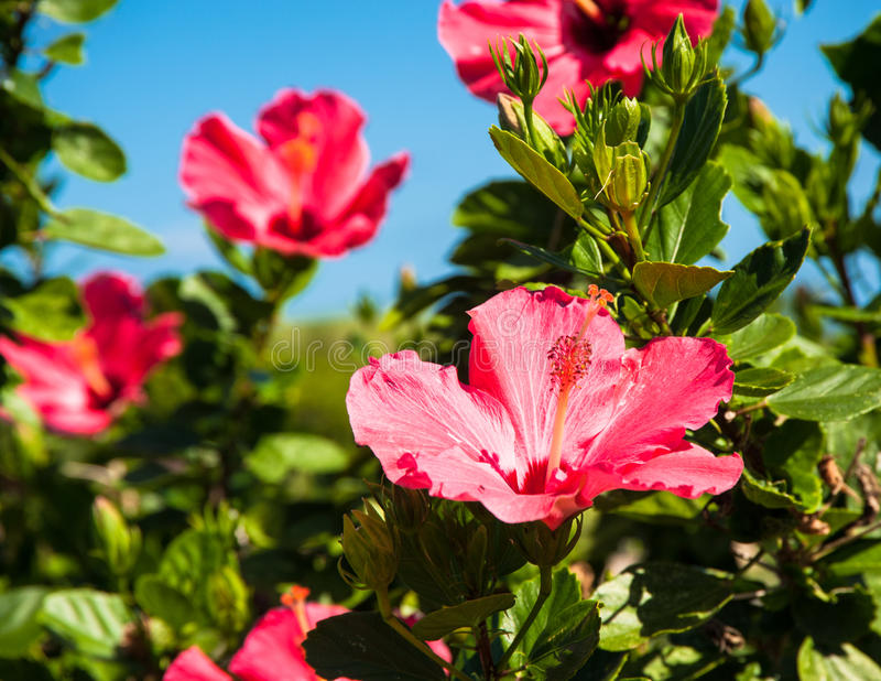 As flores de paradize fotos de stock